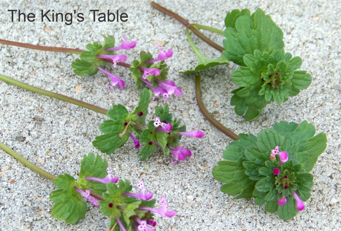 Wild Edible: Henbit - How to identify and eat this common weed | The King's Table