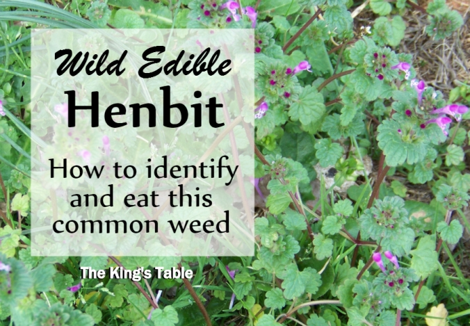 Wild Edible: Henbit -- How to identify and eat this common weed | The King's Table