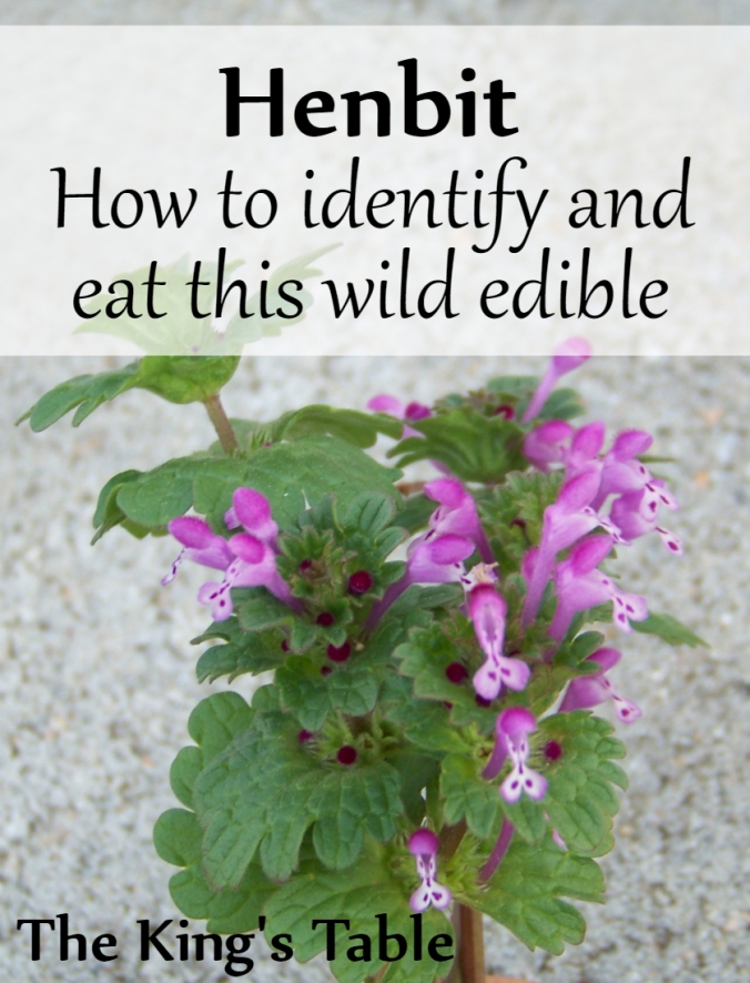 Wild Edible: Henbit: How to identify and eat this common weed | The King's Table