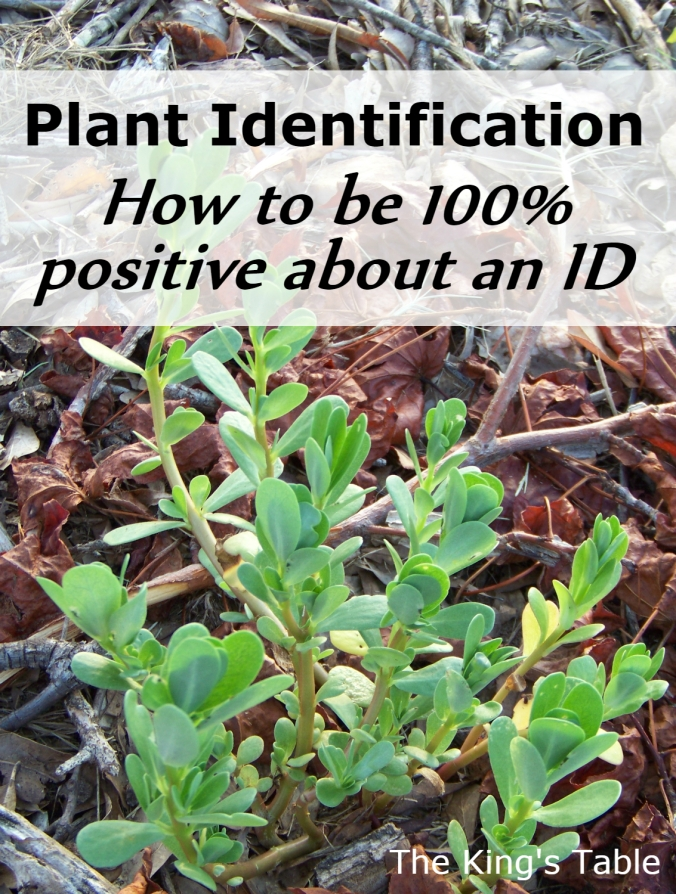 Plant Identfication - How to be 100% positive about an ID